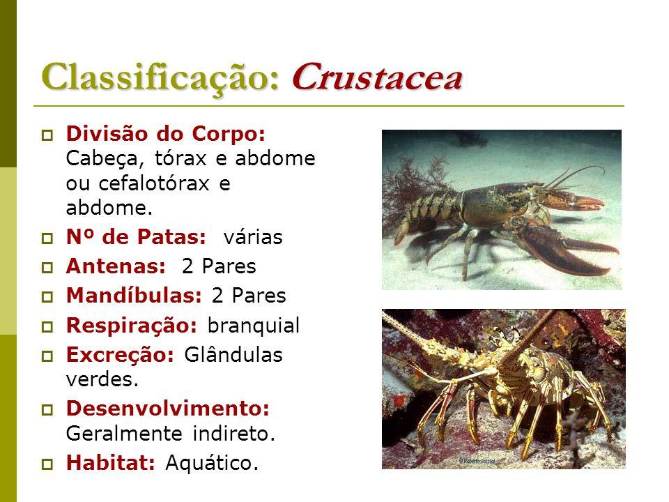Classificação: Crustacea