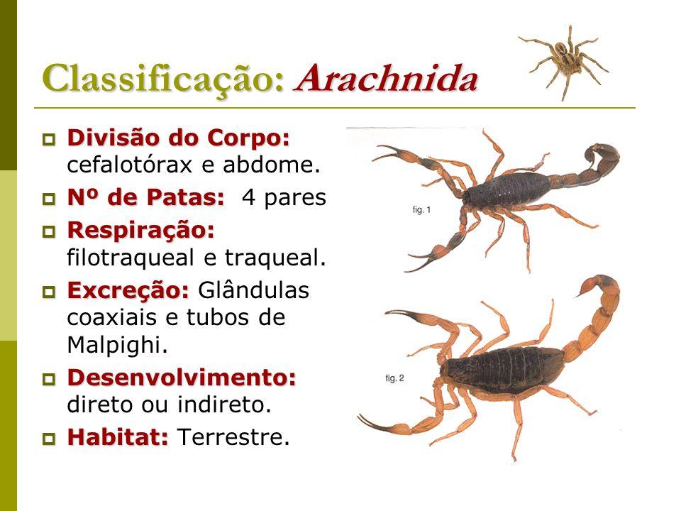 Classificação: Arachnida