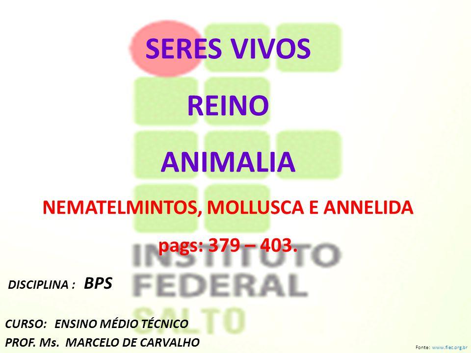 SERES VIVOS REINO ANIMALIA NEMATELMINTOS, MOLLUSCA E ANNELIDA pags: 379 – 403.