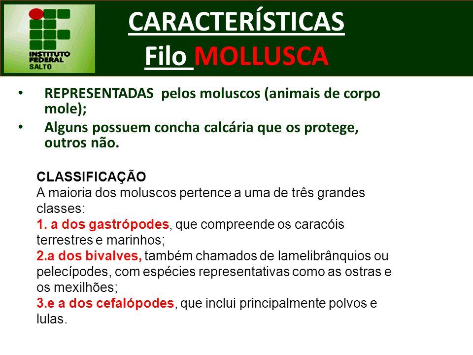 CARACTERÍSTICAS Filo MOLLUSCA