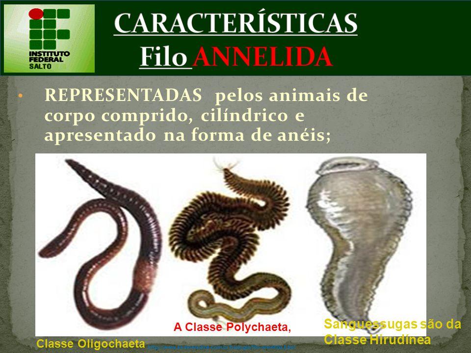 CARACTERÍSTICAS Filo ANNELIDA