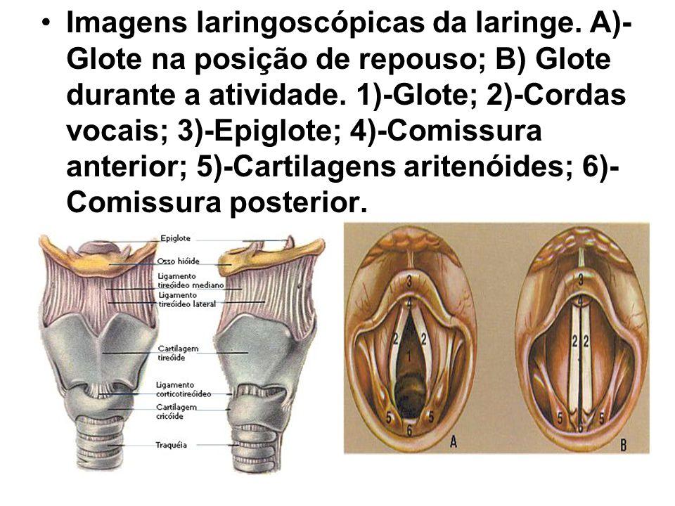 Imagens laringoscópicas da laringe