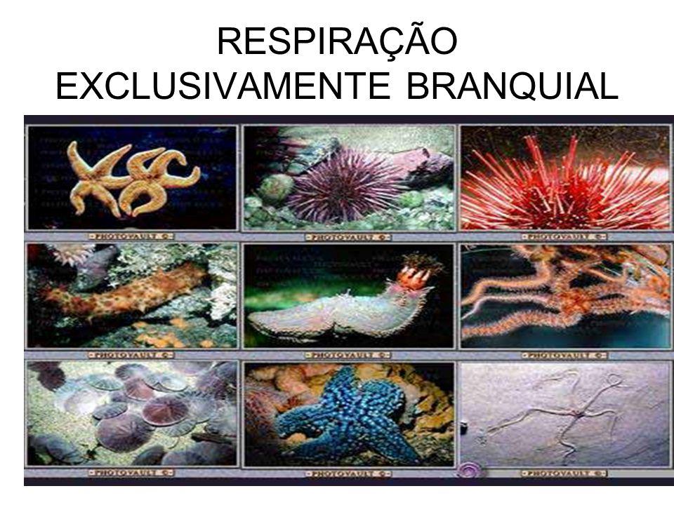 RESPIRAÇÃO EXCLUSIVAMENTE BRANQUIAL