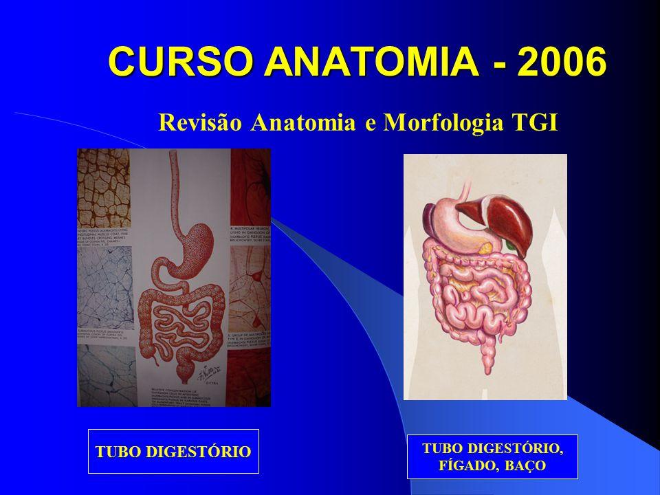 Revisão Anatomia e Morfologia TGI