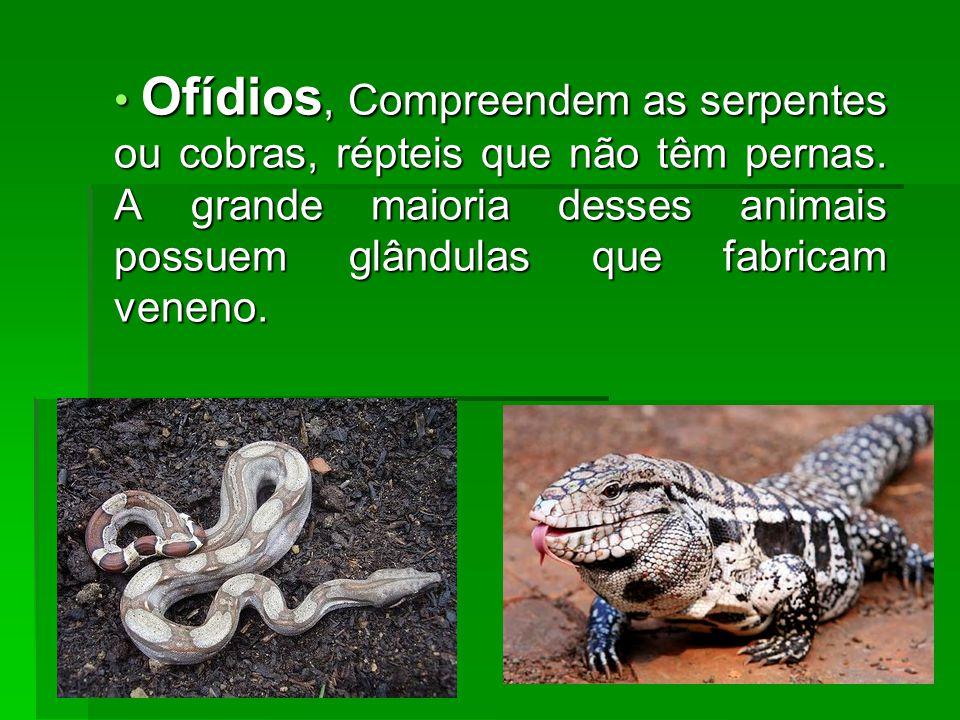 Ofídios, Compreendem as serpentes ou cobras, répteis que não têm pernas.