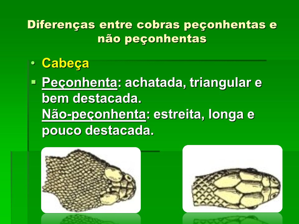 Diferenças entre cobras peçonhentas e não peçonhentas