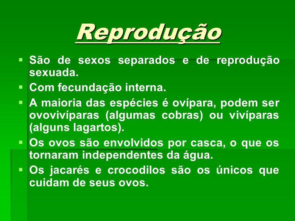 Reprodução São de sexos separados e de reprodução sexuada.