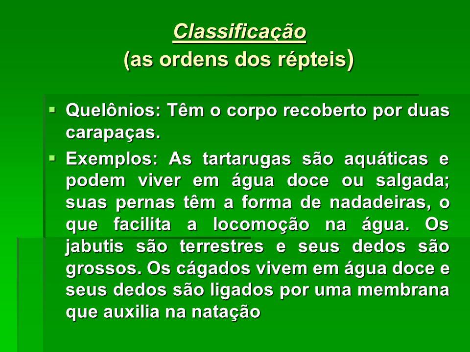 Classificação (as ordens dos répteis)
