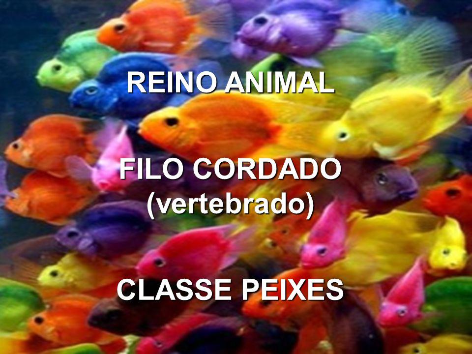 REINO ANIMAL FILO CORDADO (vertebbrado) CLASSE PEIXES