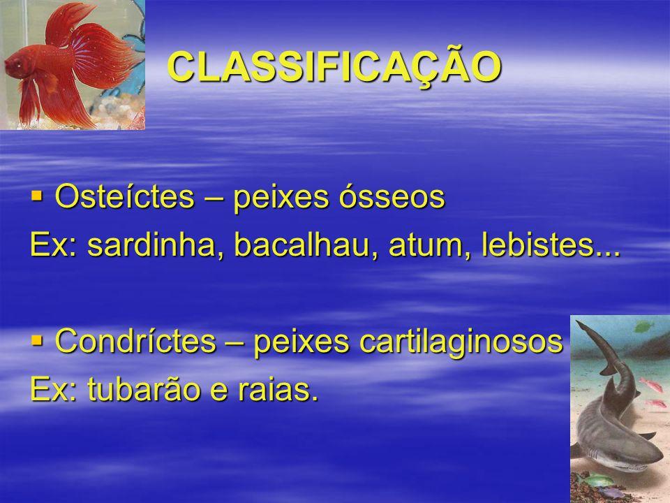 CLASSIFICAÇÃO Osteíctes – peixes ósseos
