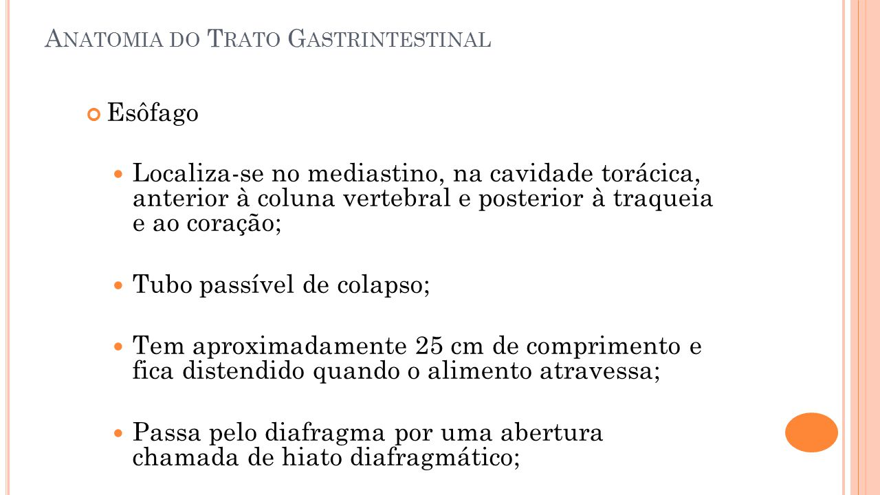 Anatomia do Trato Gastrintestinal