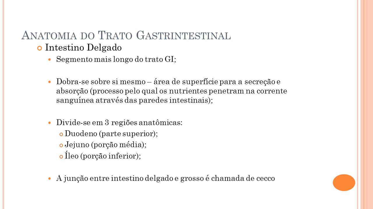 Anatomia do Trato Gastrintestinal