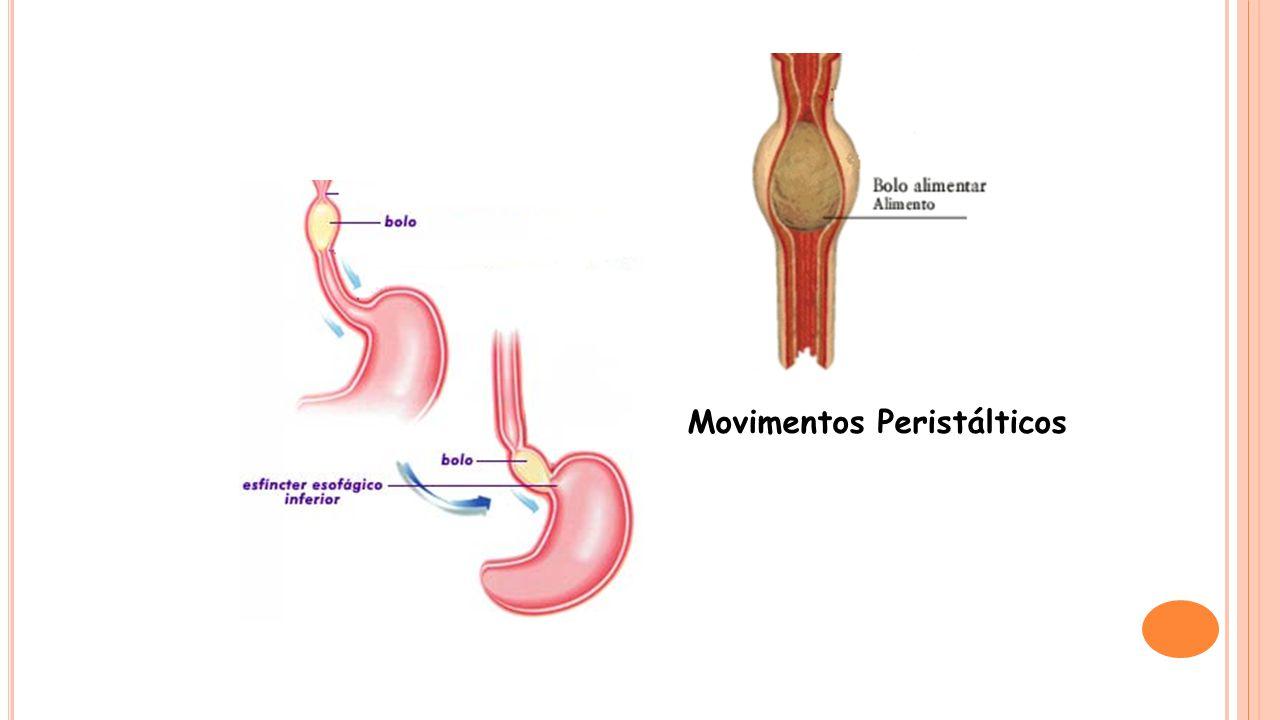 Movimentos Peristálticos