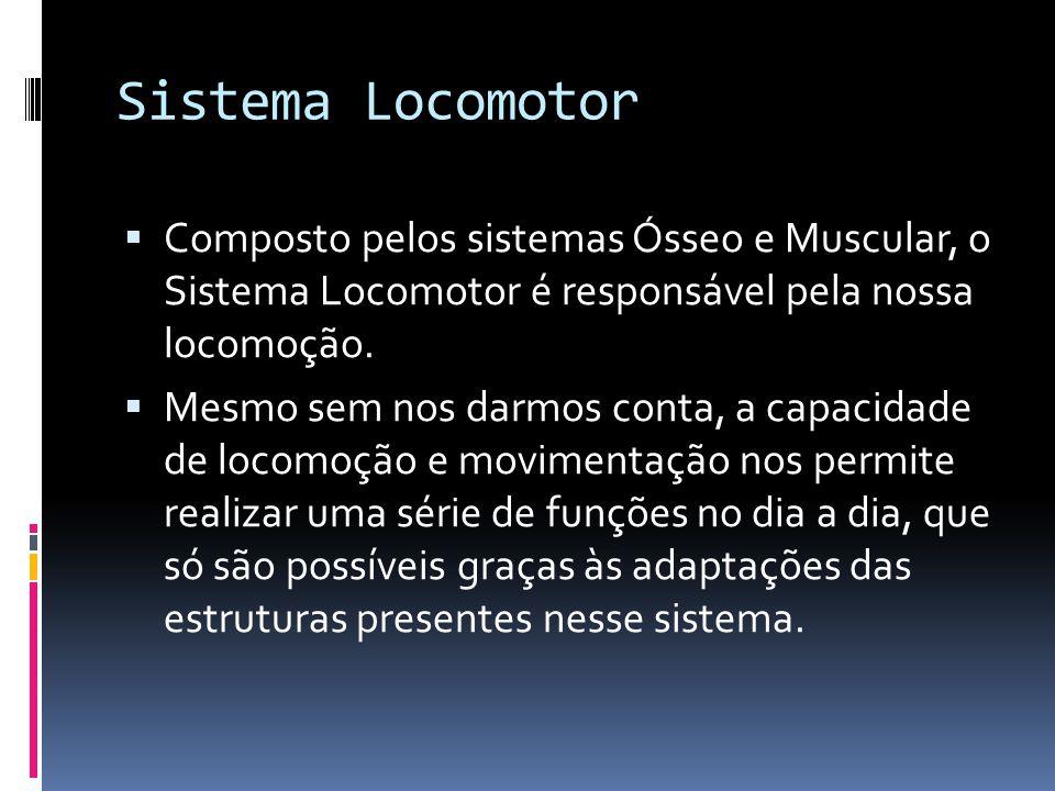 Sistema Locomotor Composto pelos sistemas Ósseo e Muscular, o Sistema Locomotor é responsável pela nossa locomoção.