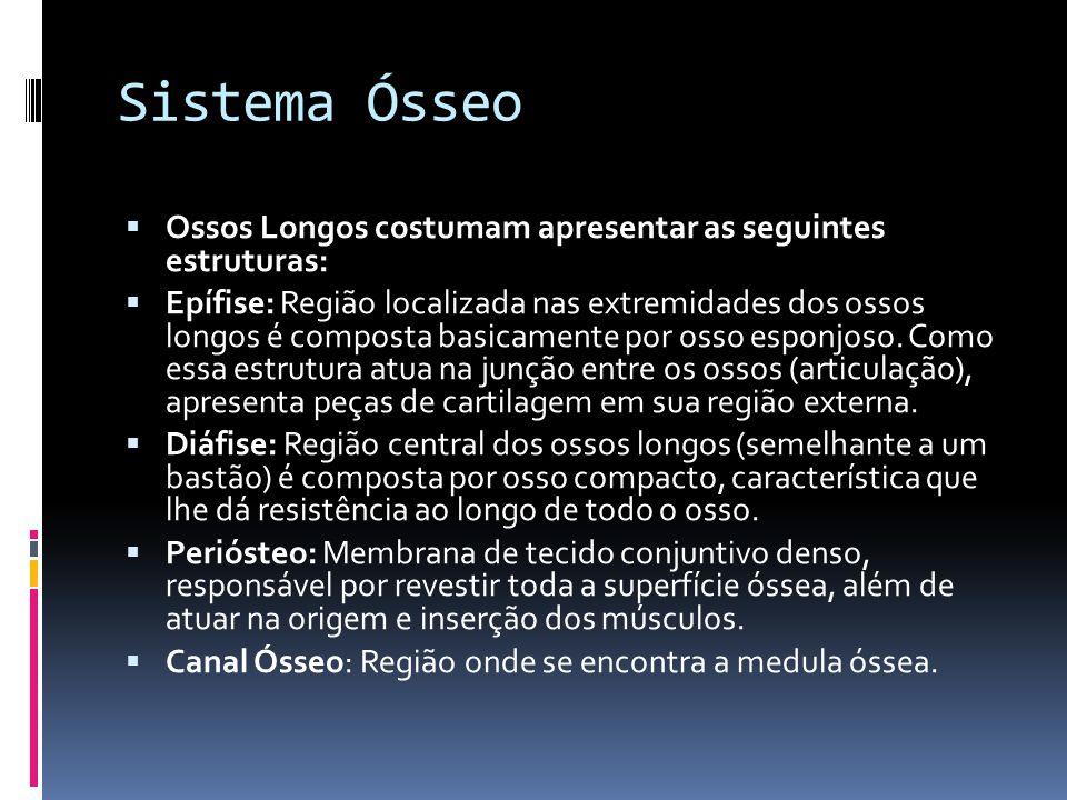 Sistema Ósseo Ossos Longos costumam apresentar as seguintes estruturas: