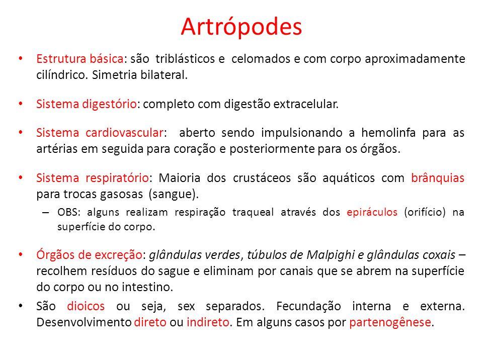Artrópodes Estrutura básica: são triblásticos e celomados e com corpo aproximadamente cilíndrico. Simetria bilateral.
