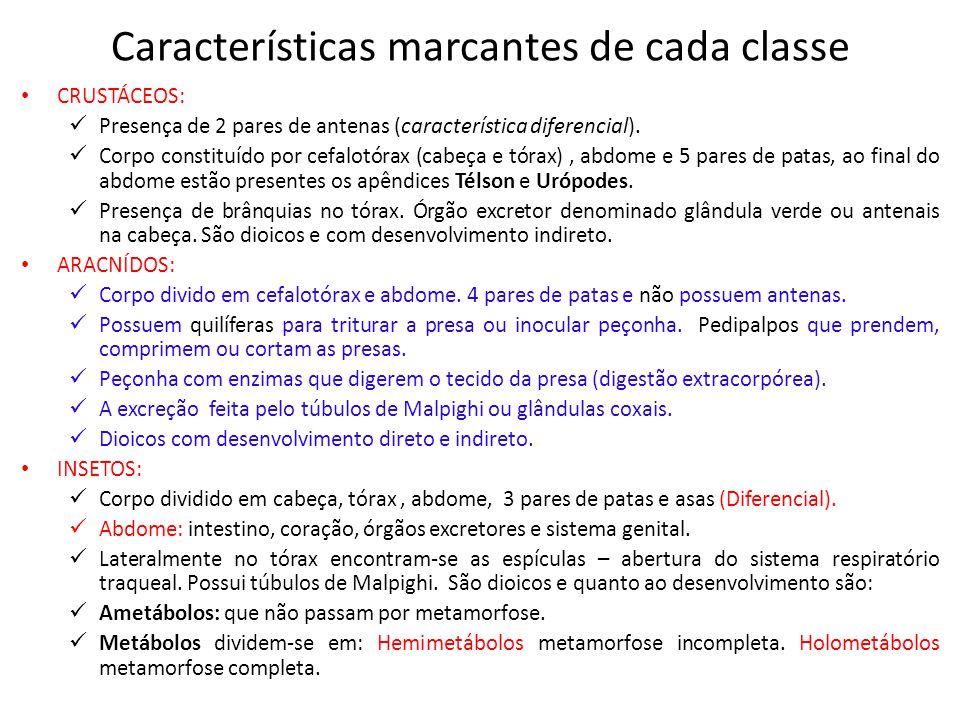 Características marcantes de cada classe