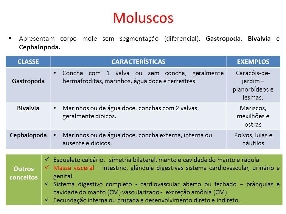 Moluscos Apresentam corpo mole sem segmentação (diferencial). Gastropoda, Bivalvia e Cephalopoda. CLASSE.