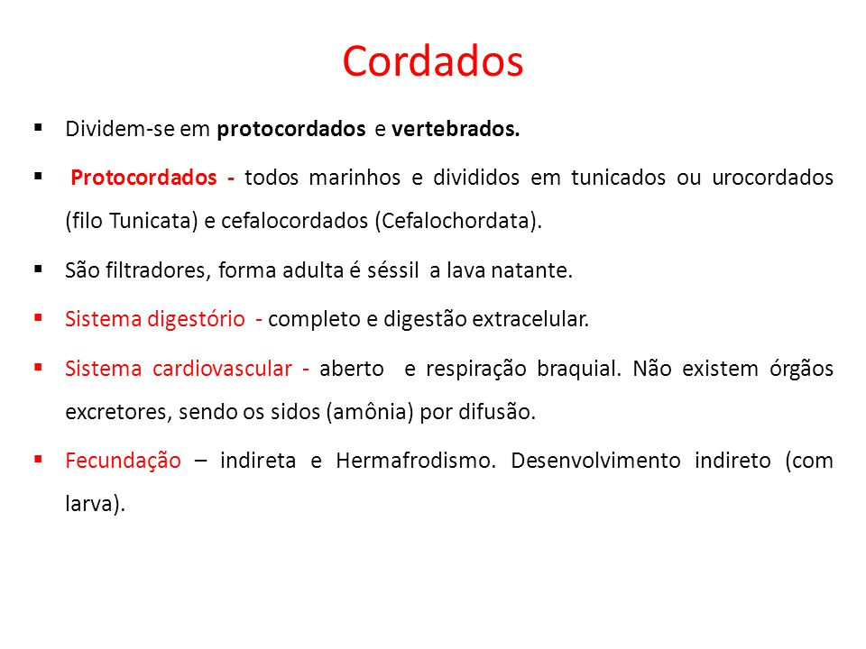 Cordados Dividem-se em protocordados e vertebrados.