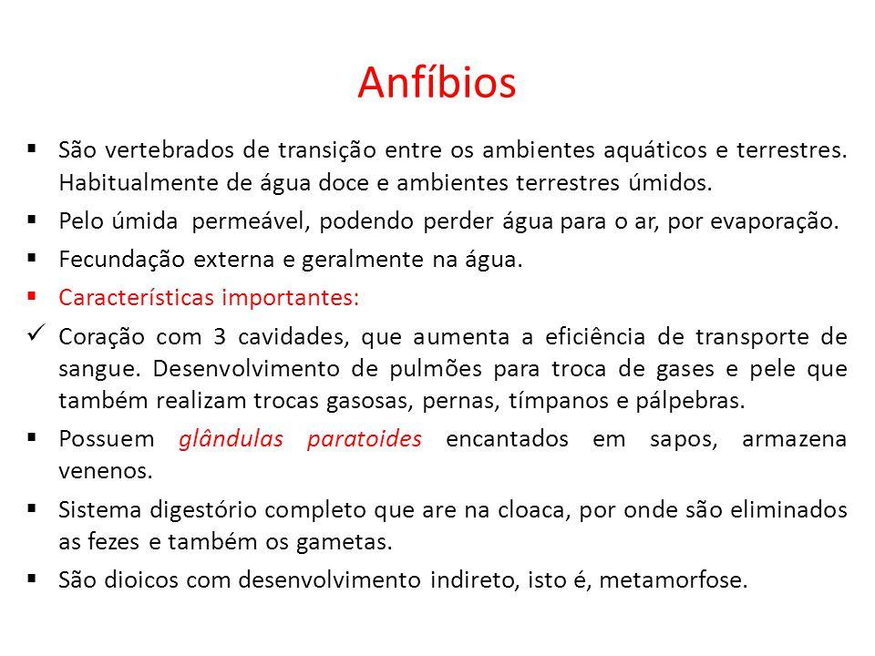 Anfíbios São vertebrados de transição entre os ambientes aquáticos e terrestres. Habitualmente de água doce e ambientes terrestres úmidos.