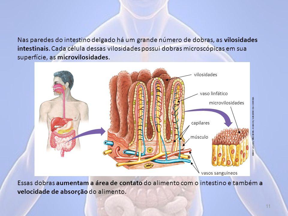 Nas paredes do intestino delgado há um grande número de dobras, as vilosidades intestinais. Cada célula dessas vilosidades possui dobras microscópicas em sua superfície, as microvilosidades.