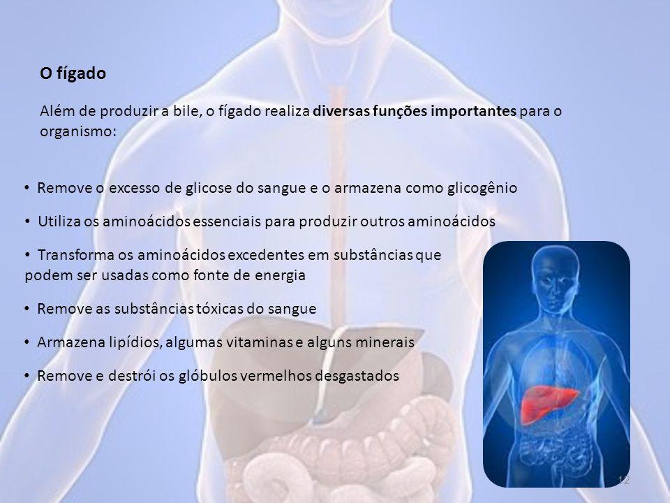 O fígado Além de produzir a bile, o fígado realiza diversas funções importantes para o organismo: