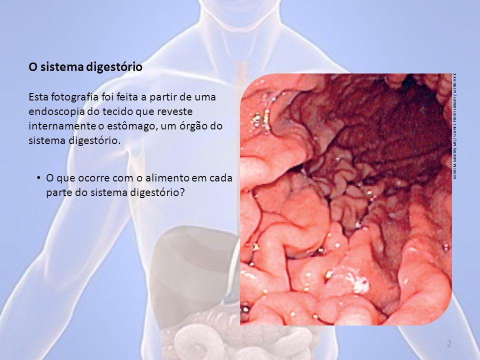O sistema digestório