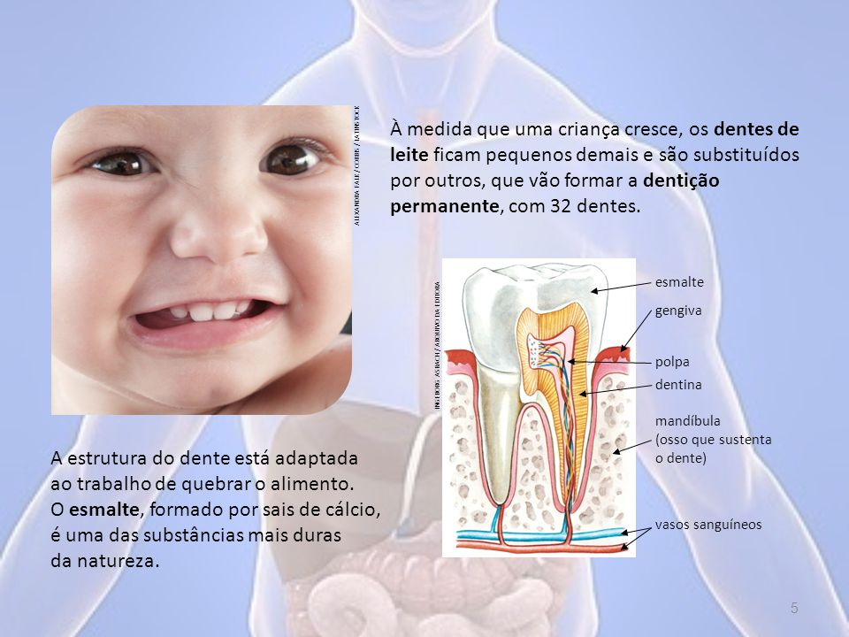 À medida que uma criança cresce, os dentes de leite ficam pequenos demais e são substituídos por outros, que vão formar a dentição permanente, com 32 dentes.