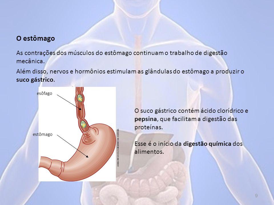 O estômago As contrações dos músculos do estômago continuam o trabalho de digestão mecânica.
