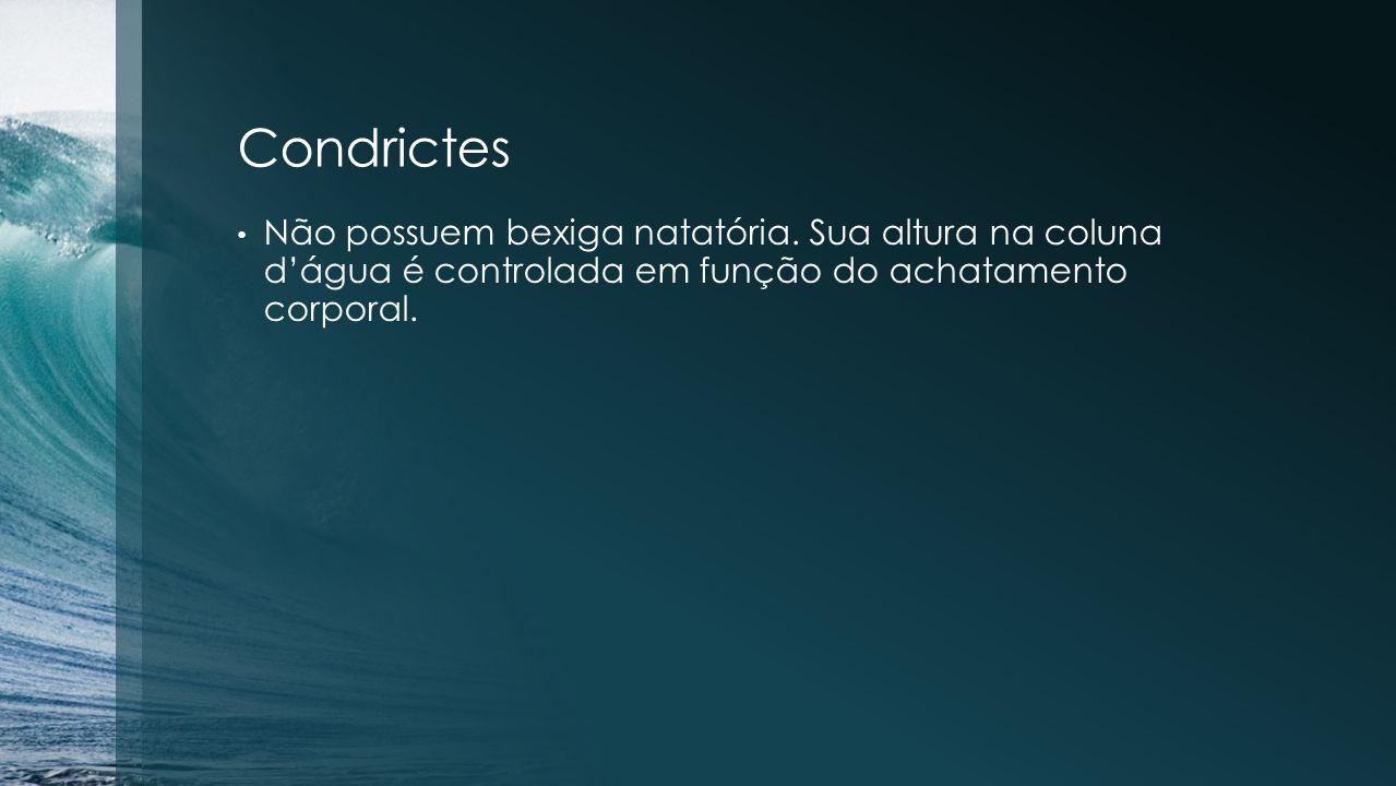 Condrictes Não possuem bexiga natatória.