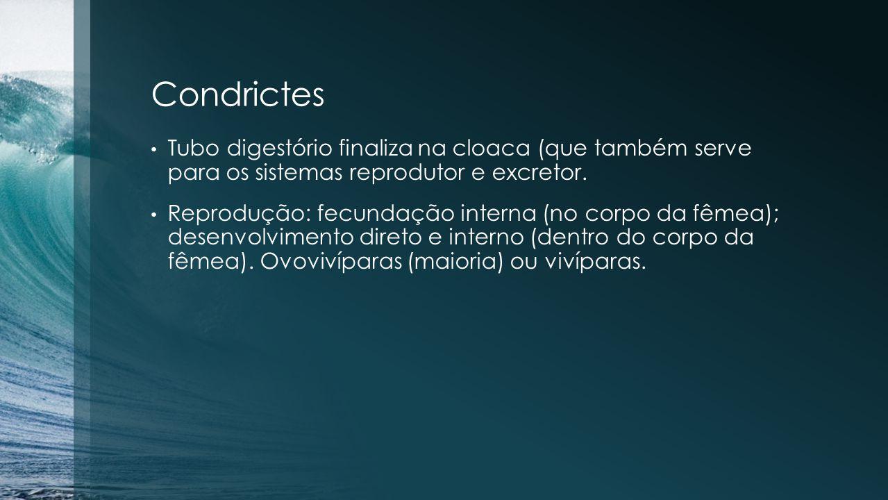 Condrictes Tubo digestório finaliza na cloaca (que também serve para os sistemas reprodutor e excretor.