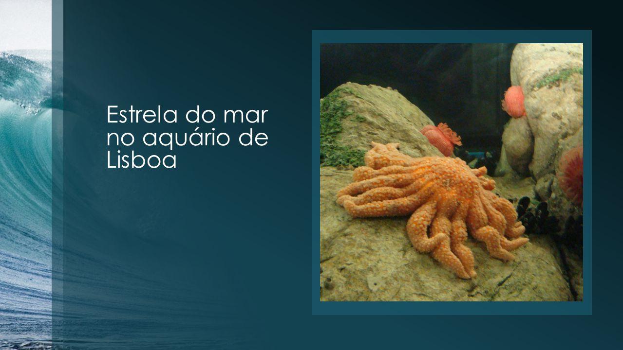 Estrela do mar no aquário de Lisboa