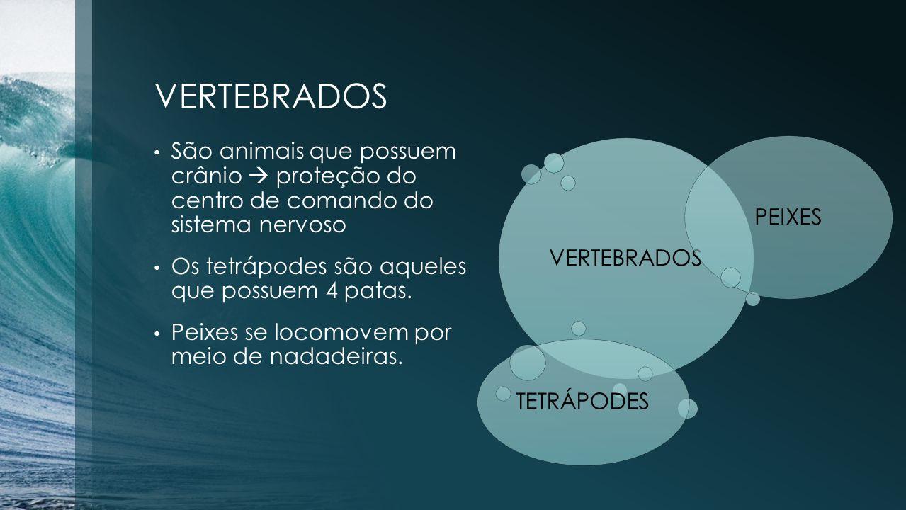 VERTEBRADOS PEIXES VERTEBRADOS