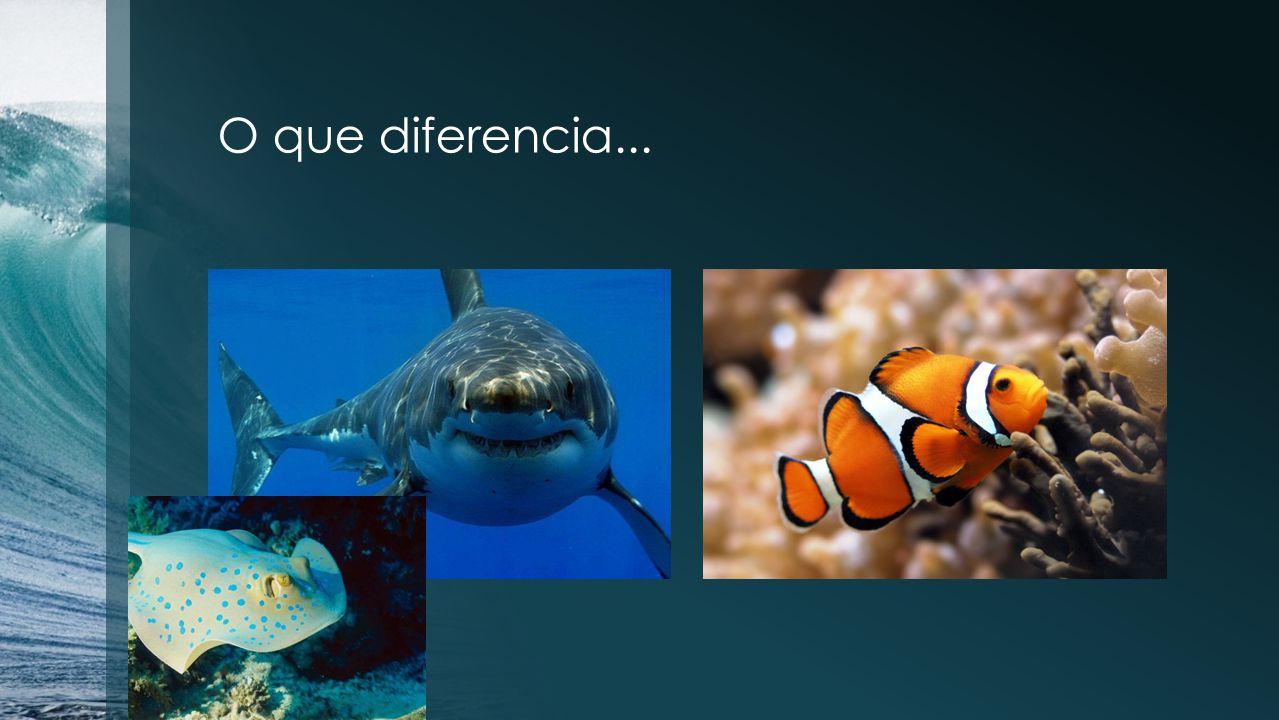 O que diferencia...