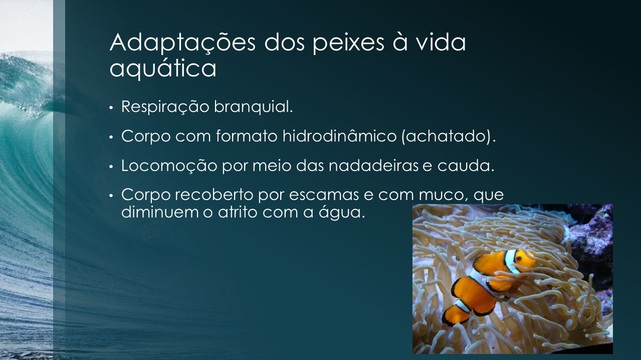 Adaptações dos peixes à vida aquática