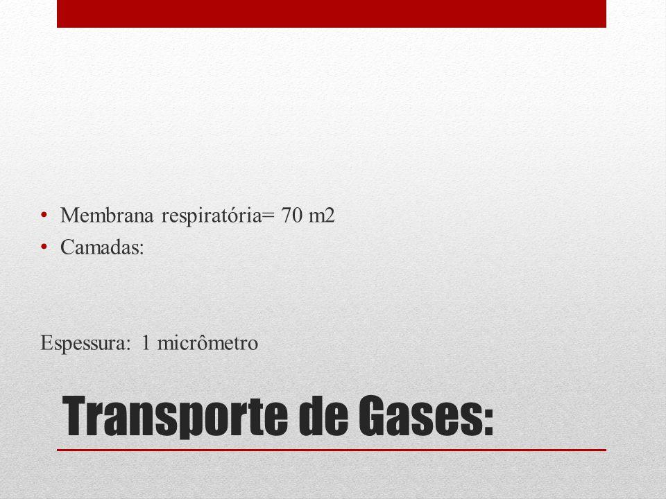 Transporte de Gases: Membrana respiratória= 70 m2 Camadas: