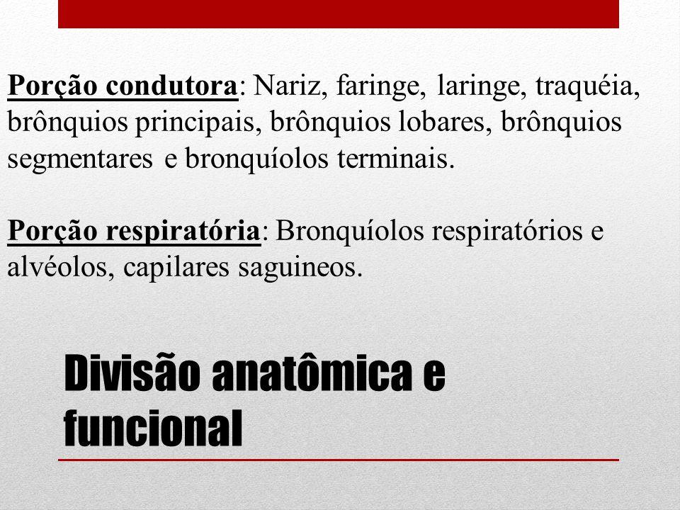 Divisão anatômica e funcional