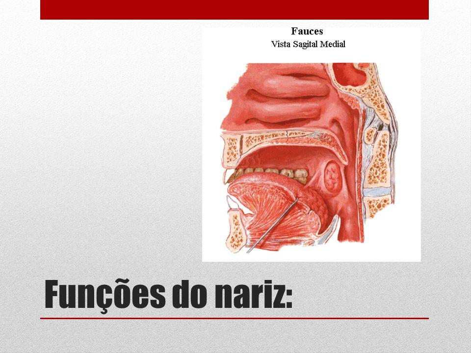 Funções do nariz: