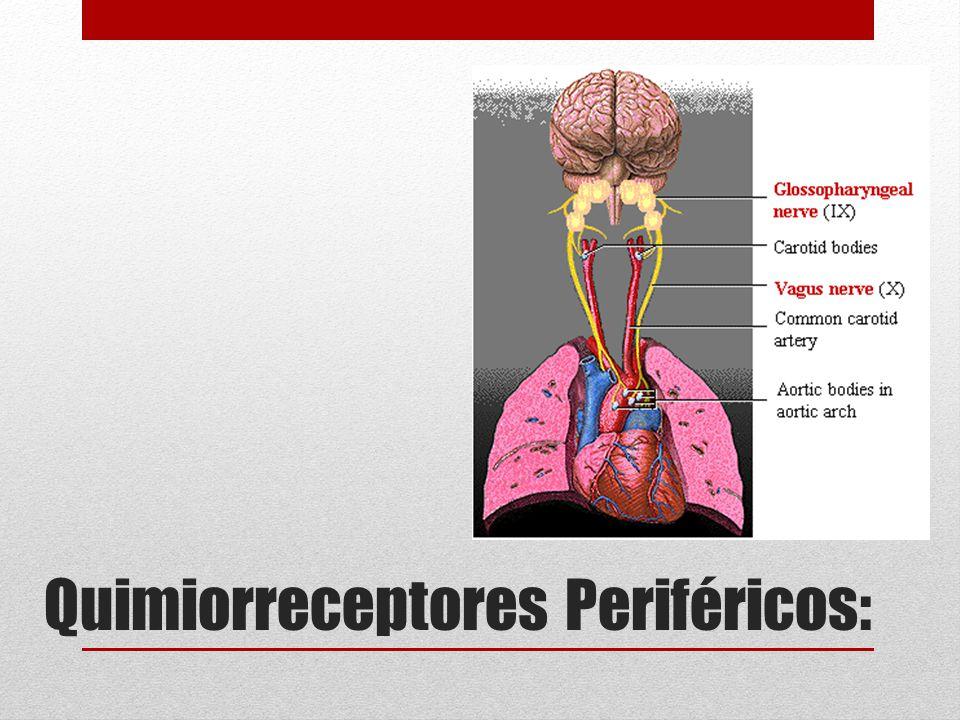 Quimiorreceptores Periféricos:
