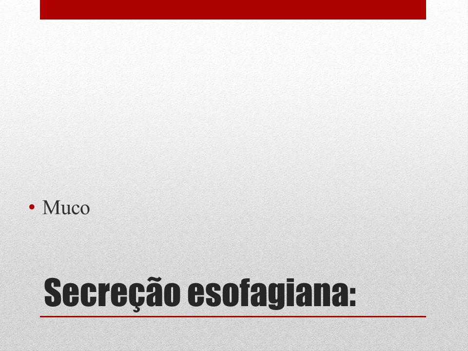 Muco Secreção esofagiana: