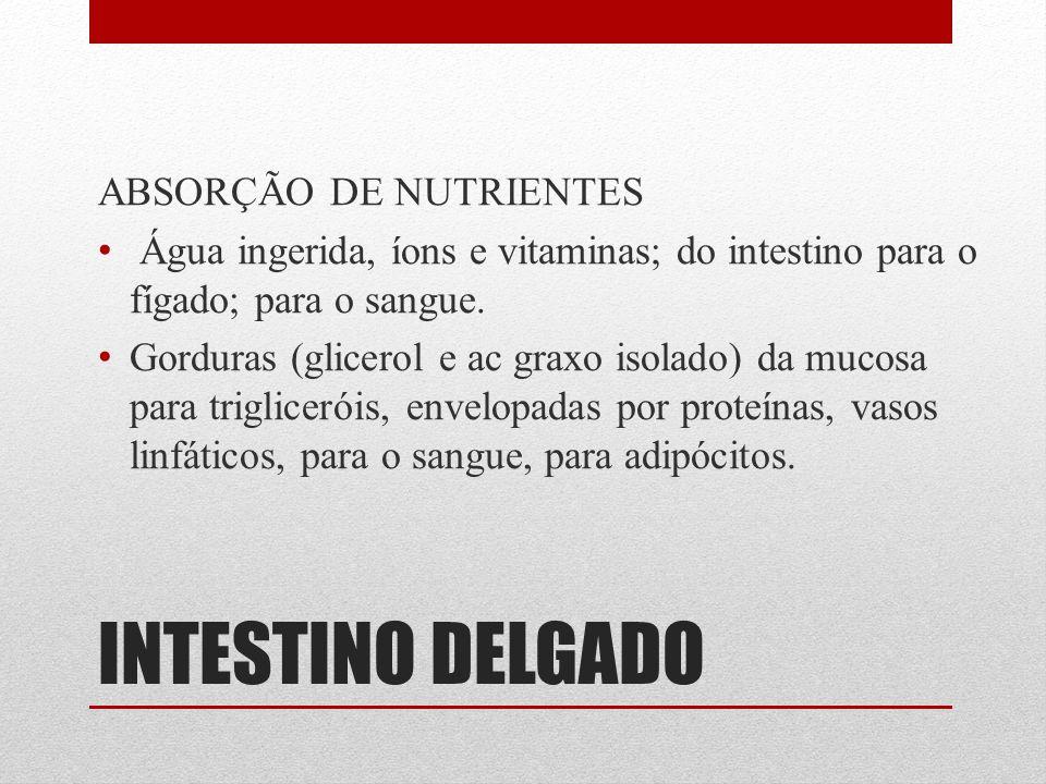 INTESTINO DELGADO ABSORÇÃO DE NUTRIENTES