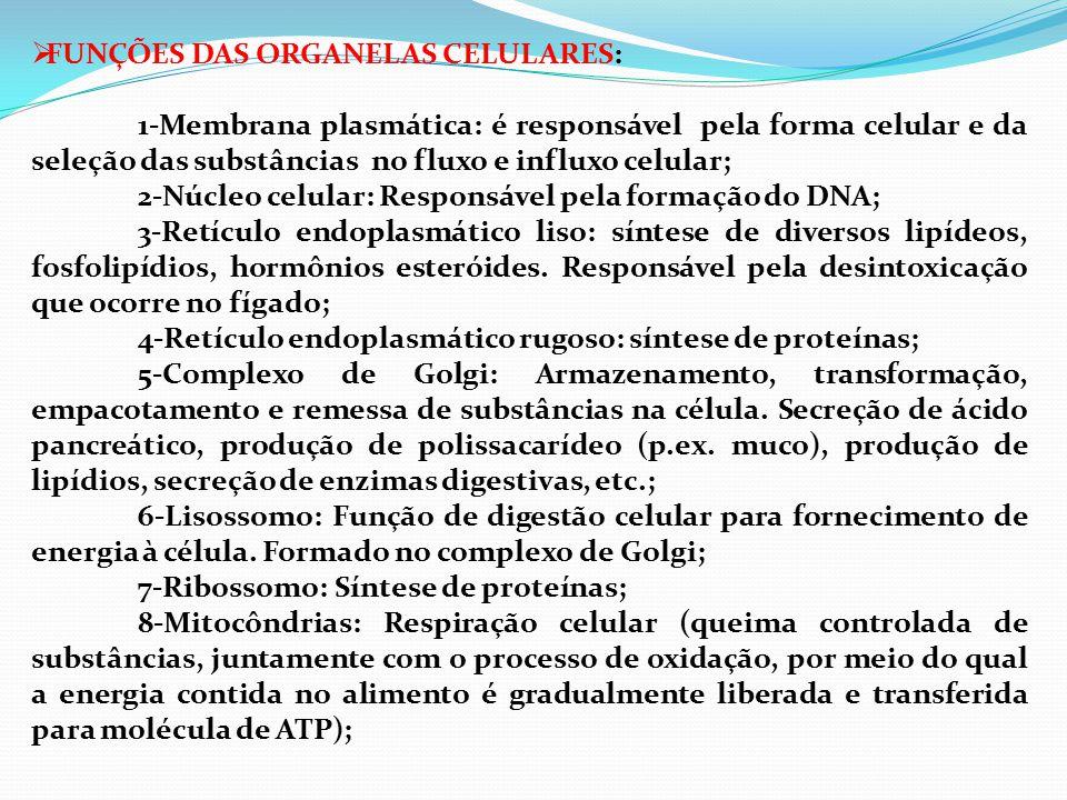 FUNÇÕES DAS ORGANELAS CELULARES: