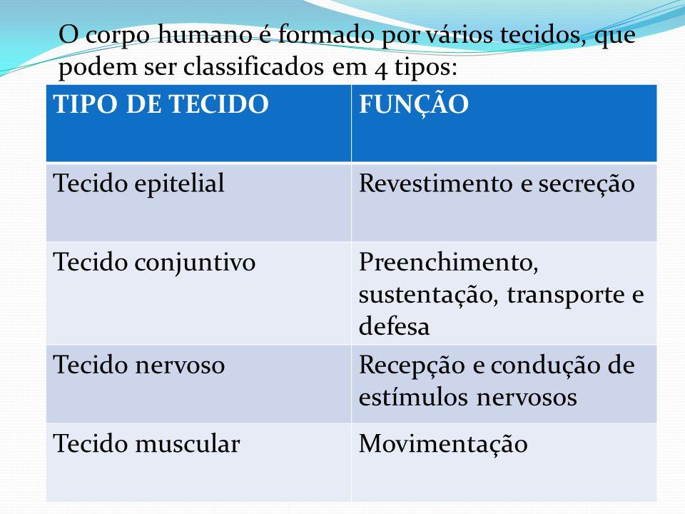 O corpo humano é formado por vários tecidos, que