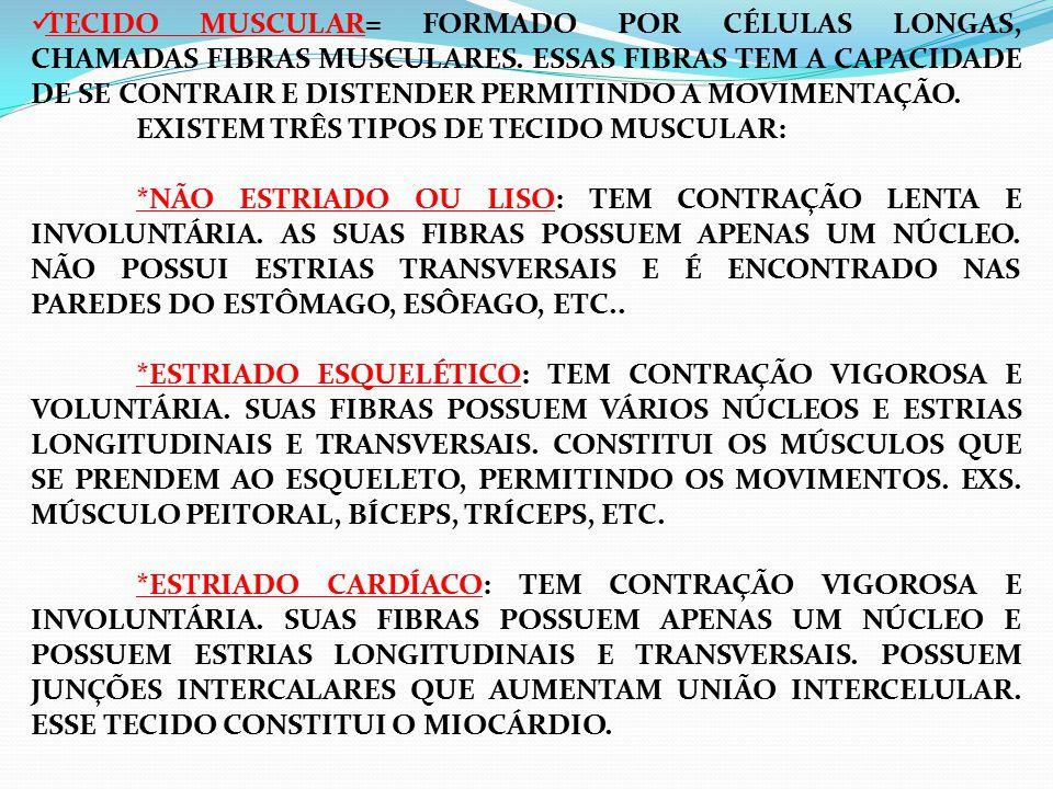 TECIDO MUSCULAR= FORMADO POR CÉLULAS LONGAS, CHAMADAS FIBRAS MUSCULARES.