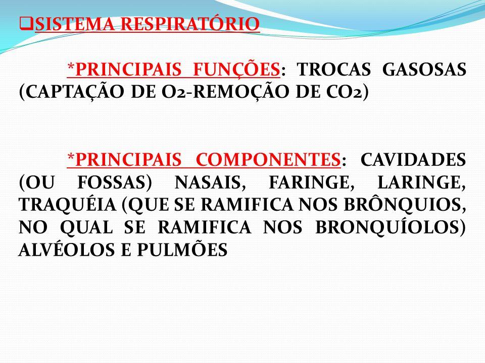 SISTEMA RESPIRATÓRIO *PRINCIPAIS FUNÇÕES: TROCAS GASOSAS (CAPTAÇÃO DE O2-REMOÇÃO DE CO2) *PRINCIPAIS COMPONENTES: CAVIDADES (OU FOSSAS) NASAIS, FARINGE, LARINGE, TRAQUÉIA (QUE SE RAMIFICA NOS BRÔNQUIOS, NO QUAL SE RAMIFICA NOS BRONQUÍOLOS) ALVÉOLOS E PULMÕES