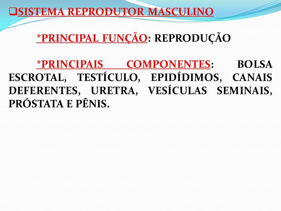 SISTEMA REPRODUTOR MASCULINO. PRINCIPAL FUNÇÃO: REPRODUÇÃO