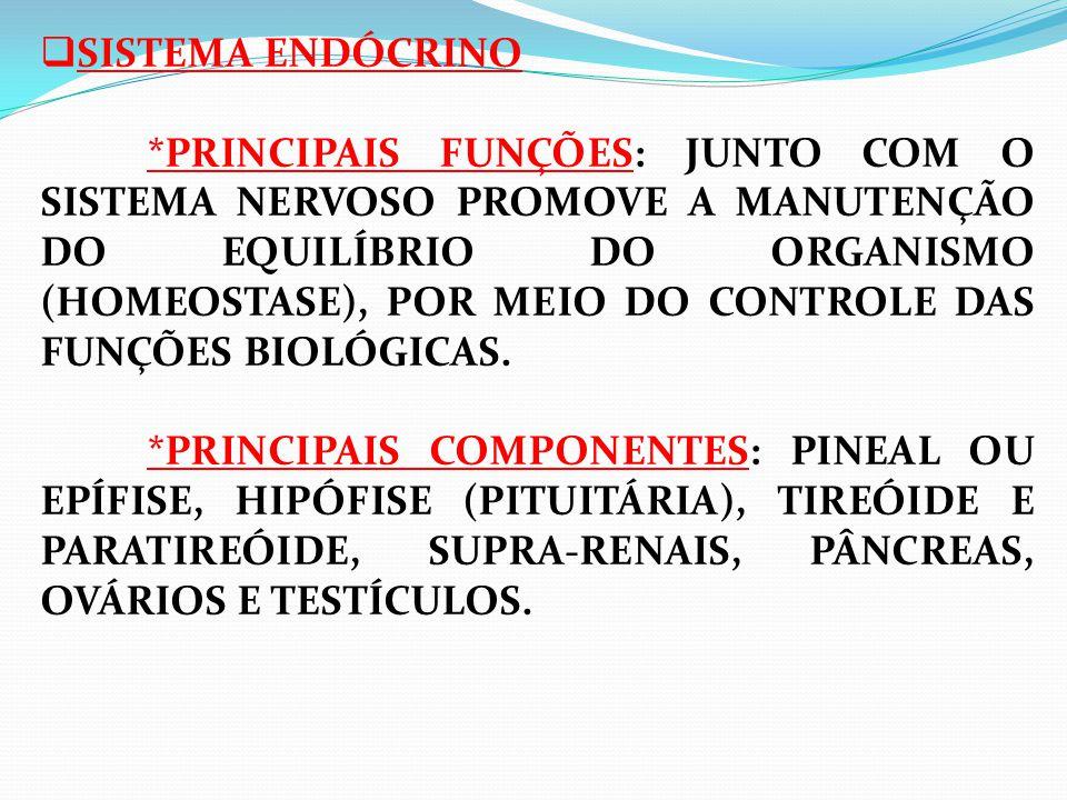 SISTEMA ENDÓCRINO *PRINCIPAIS FUNÇÕES: JUNTO COM O SISTEMA NERVOSO PROMOVE A MANUTENÇÃO DO EQUILÍBRIO DO ORGANISMO (HOMEOSTASE), POR MEIO DO CONTROLE DAS FUNÇÕES BIOLÓGICAS. *PRINCIPAIS COMPONENTES: PINEAL OU EPÍFISE, HIPÓFISE (PITUITÁRIA), TIREÓIDE E PARATIREÓIDE, SUPRA-RENAIS, PÂNCREAS, OVÁRIOS E TESTÍCULOS.
