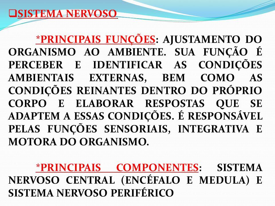 SISTEMA NERVOSO *PRINCIPAIS FUNÇÕES: AJUSTAMENTO DO ORGANISMO AO AMBIENTE.