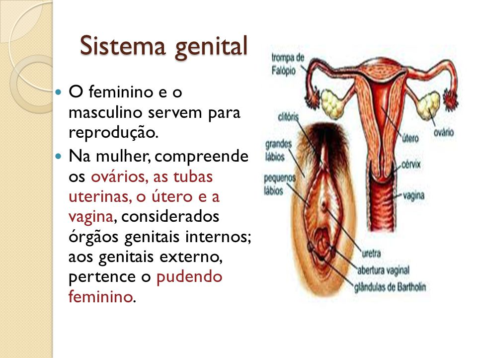 Sistema genital O feminino e o masculino servem para reprodução.