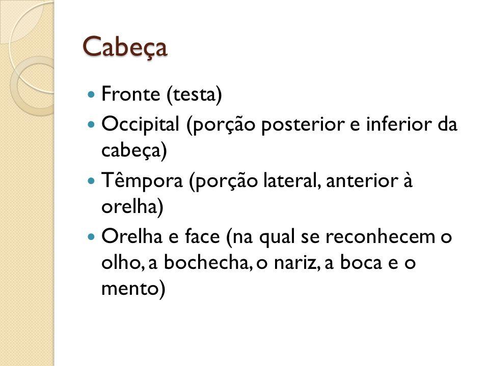 Cabeça Fronte (testa) Occipital (porção posterior e inferior da cabeça) Têmpora (porção lateral, anterior à orelha)